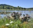 Fernhill Wetlands