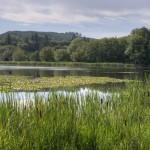 Vernonia Mill Pond